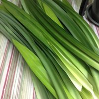 Fresh Pandan Leaves 4 oz. ( Rampe, La Dua, ใบเตยสด )